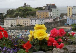 Bright flowers with Tenby coloured houses behind